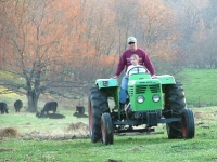 Gary and Mary dragging manure into pasture